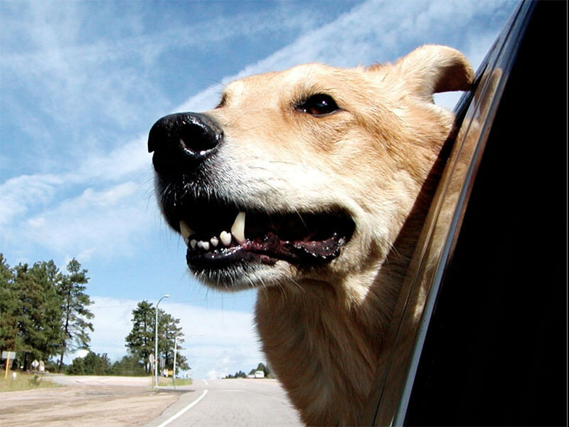 Best Pet Transportation Services