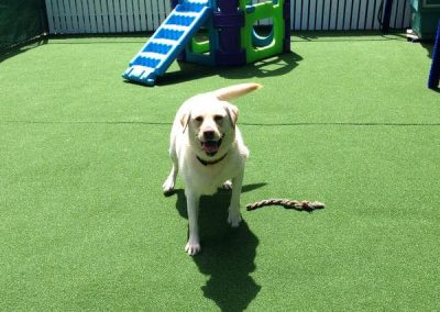 Gold Coast Pet Resort